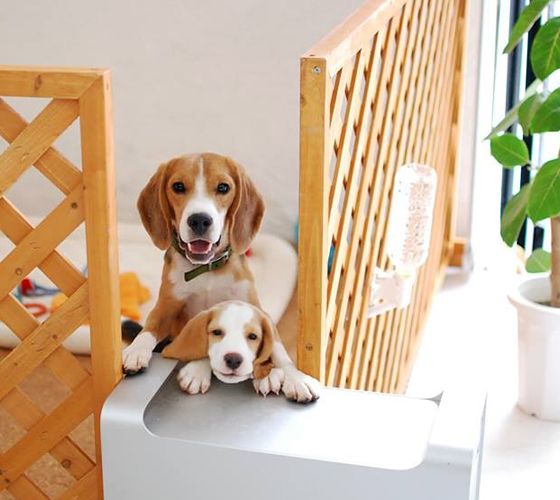 Image result for 犬 beagles  美しい